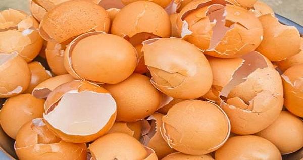 Tak Disangka, Kulit Telur Ternyata Bisa Dimakan dan Manfaatnya Menakjubkan